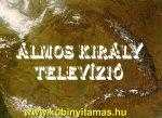 ÁLMOS KIRÁLY TELEVÍZIÓ