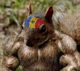 Románok, a nacionalista mókus!