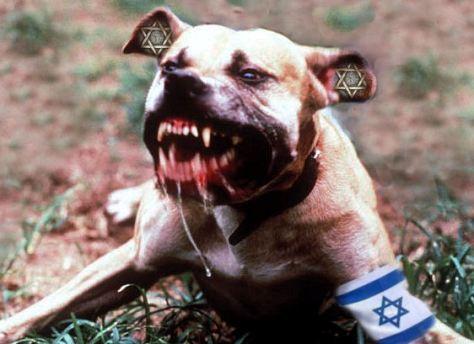israel-dog