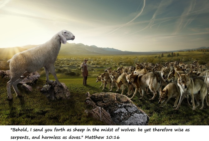 Mate 10-16_sheep-before-wolves1