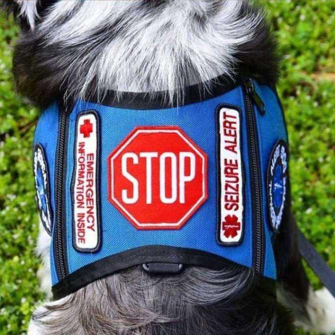 Ne simogasd! – azaz: Hogyan bánjunk a terápiás és vezető kutyákkal?