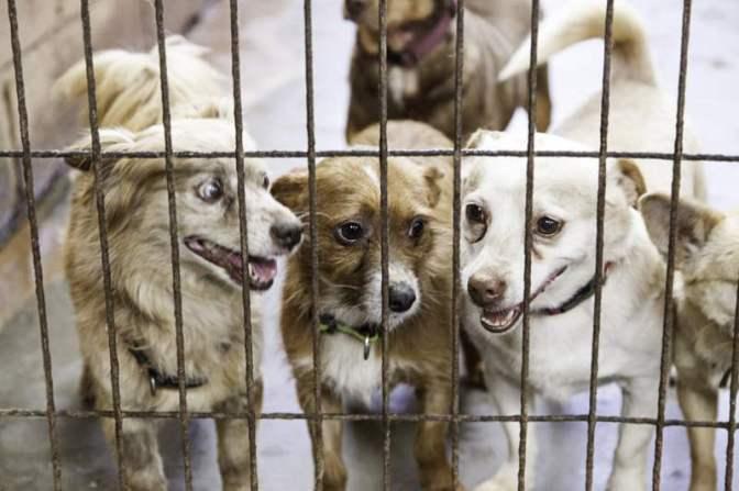 Szilveszter áldozatai: tele az utca kóbor, sérült állatokkal